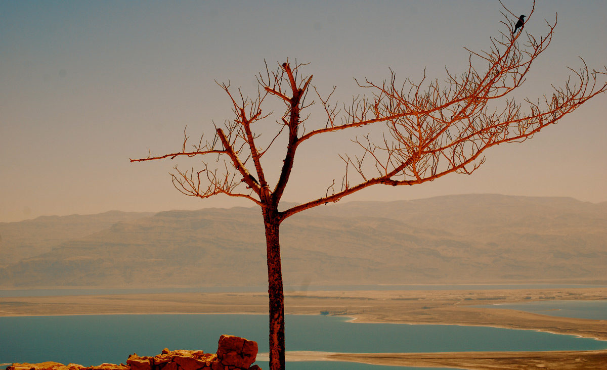 A tree at Masada. Karen Chan/Flickr.